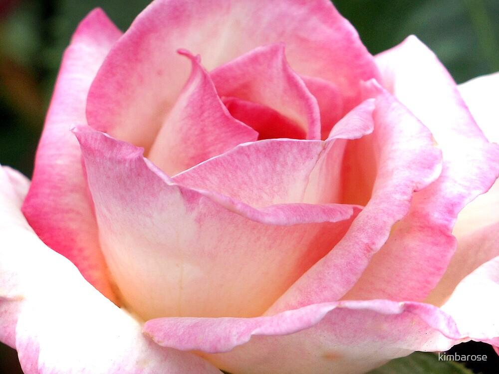 Rosea by kimbarose
