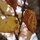 Autumn Decay III by myREVolution