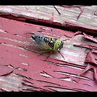 Cicada by Ronald Henley