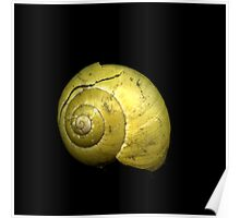 Small Snail Shell Poster