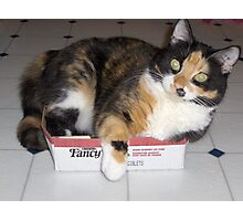 cat-in-a-box Photographic Print