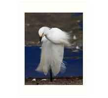 Snowy Egret Posing Art Print