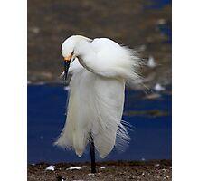 Snowy Egret Posing Photographic Print