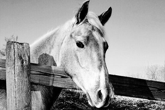 Geronimo in Black and White by Nadya Johnson