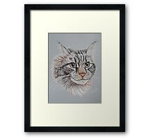 """Romeo Maine Coon Cat"" Framed Print"