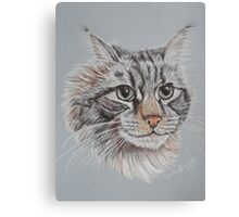 """Romeo Maine Coon Cat"" Canvas Print"