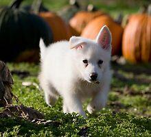 Pumpkin Pickin' by Silivrenwolf
