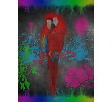 Graffiti Concrete Parrot Photographic Print
