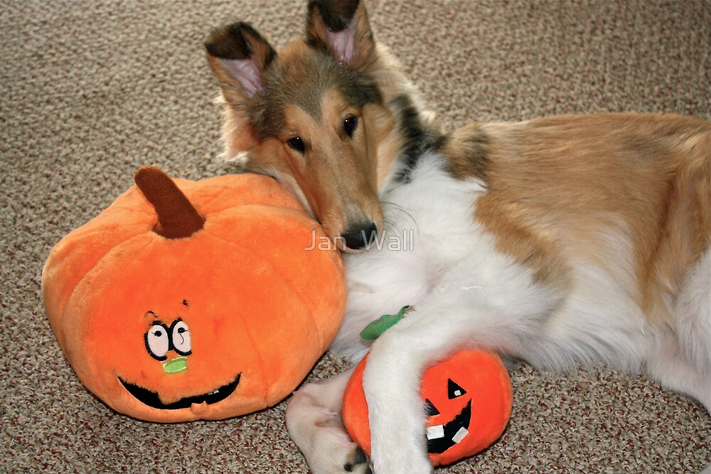 Lovin' those Pumpkins! by Jan  Wall