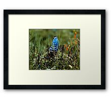 Small Falcon; Maybe Not Framed Print
