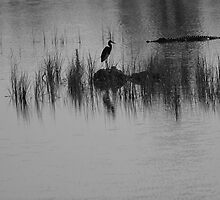 silhouette's of the swamp by kathy s gillentine