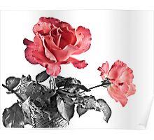 Dos Rosas Poster