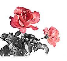 Dos Rosas Photographic Print