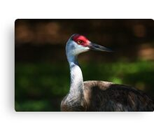 are you looking at me ? Canvas Print