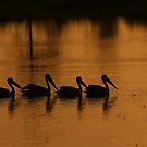 follow the leader by kathy s gillentine