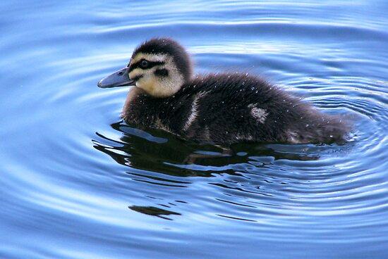 quack by vampvamp