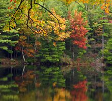 Visions of Autumn by Pamela Phelps