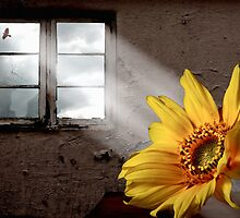 Natural Light by John Edwards