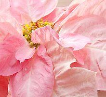 Delicate Poinsettia by Marilyn Cornwell