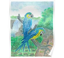 Blue and yellow maccaw-oilpastels Poster