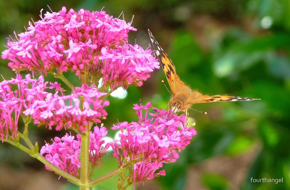 Butterfly Paulie 1 by fourthangel