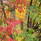 Autumn by Vonnie Murfin