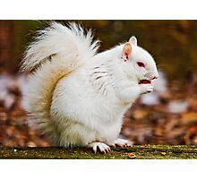 Albino Grey Squirrel Photographic Print