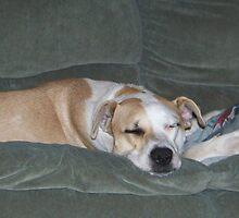 couch potato by gabbielizzie