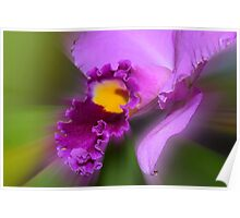 'picture perfect' Orchid 14 Poster