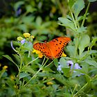 Butterflys in Fall by Melapaloosa