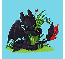 Dragons Love Grass Photographic Print