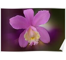 'picture perfect' Orchid 16 Poster