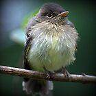"""""""Baby Bird"""" by Lynn Bawden"""