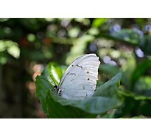 Alien Butterfly  Photographic Print