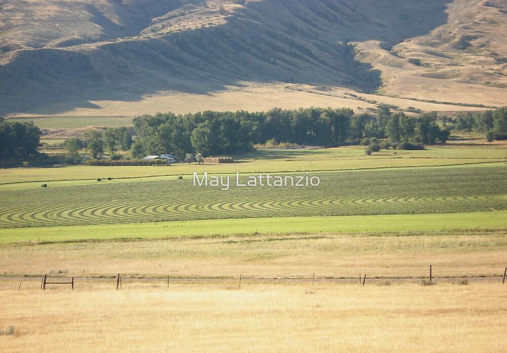 Alfalfa Field by May Lattanzio
