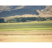 Alfalfa Field Photographic Print