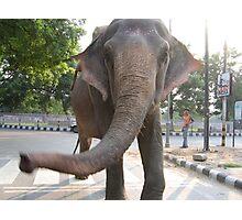 Elephant Encounter Photographic Print