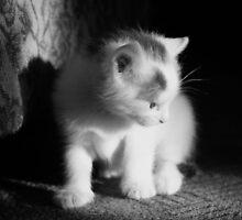 kitty by Adriana Wasyk