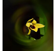 'picture perfect' Orchid 19 Photographic Print