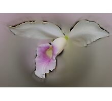 'picture perfect' Orchid 20 Photographic Print