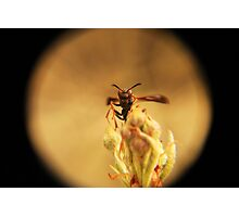 Wasp and Flower Bud Macro Photographic Print