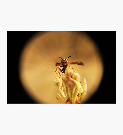 Wasp and Flower Bud Macro Photographic Print