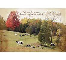 Peaceful Cows Photographic Print