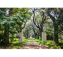 Oak Tree Lined Southern Drive Photographic Print