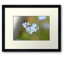 Forget Me Not Heart Framed Print