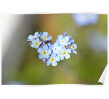 Forget Me Not Heart Poster