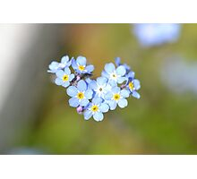 Forget Me Not Heart Photographic Print