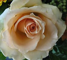 Apricot Rose in Repose by MarianBendeth