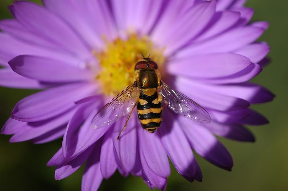 Shiny Bee on Flower by LOJOHA