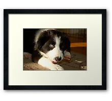 Baby Gracie (Border Collie) Framed Print